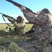 Организация охоты в Венгрии фото