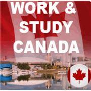 Work & Study фото