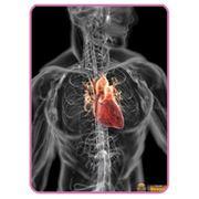 Кардиолог - вызов врача диагностика. фото