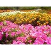Устройство альпинариев, горки, розарии, миксбордеры и цветники фото