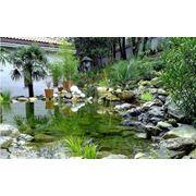 Оформление парков водоемов растениями из собственного питомника фото