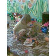 Домашний детский сад Вини-пух фото