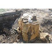 Выкорчевывание деревьев Донецк область фото