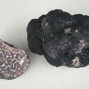 Продам грибы Черный Трюфель фото