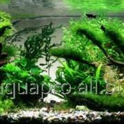 Корма для рыбок Tetra, Sera фото