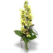 Орхидеи,Цветы орхидеи,купить орхидею фото