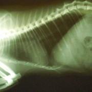 Рентген-исследования фото