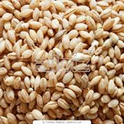 Крупы пшеничные оптом в Казахстане фото