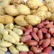 Принимаем заявки на арахис Аргентина. Урожай 2013 года фото