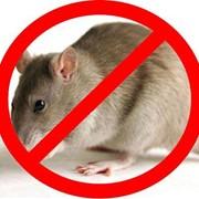 Уничтожение мышей. фото