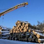 Лесозаготовка. ЧП Еврошпон-Смыга, Ровенская область Украина фото