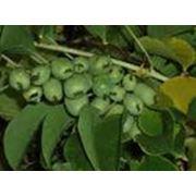 Посадка эксклюзивных растений, реликтовых деревьев фото