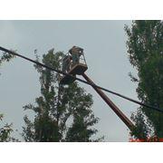 Кронирование деревьев Киев. (067)4475221 Обрезка веток. Удаление деревьев спил вырубка. Удаление пней. фото