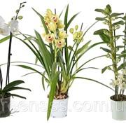 Орхидеи микс -- Orchids mixed фото