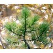 Охрана и защита леса Украина фото