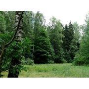 Защита леса лечение оздоровление лесных насаждений фото