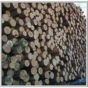 Лесозаготовка пиловочника сосна ель фото
