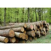 Лесозаготовка погрузка и вывоз круглых лесоматериалов фото
