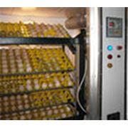 Примем яйца на инкубацию ( до 90 тыс. шт.) фото