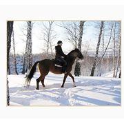Гостиница Киев-S Жашков конные прогулки экскурсия на конный завод езда на лошадях конях инструктор фото
