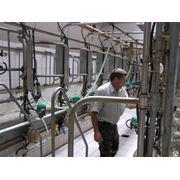 Строительство молочно-товарных ферм проект молочно-товарных ферм фото