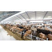 Реконструкция молочно-товарных ферм. Оборудование для молочных ферм. DeLaval (Швеция). фото