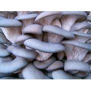 Строительство комплексов по выращиванию грибов фото