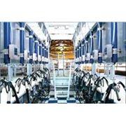 Проектирование линейных доильных установок и доильных залов.Проектирование молокопровода доильных установок и доильных залов охладителей молока.Поставки оборудования от производителя ДеЛаваль. фото