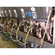 Услуги по обслуживанию молокопровода доильных установок и доильных залов охладителей молока летнего лагеря фото