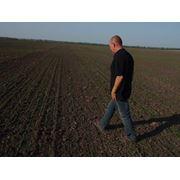 Агрономическое сопровождение выращивания льна. Борьба с болезнями растений. фото