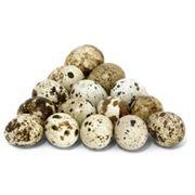 фазаньи яйца фото