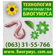Продам технологию производства биогумуса в Харькове Украина фото