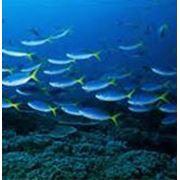 Разведение пресноводной рыбы рыбопосадочный материал фото