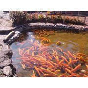 Проектирование прудовых и индустриальных рыбохозяйственных предприятий создание фермерских хозяйств и приусадебных водоемов фото