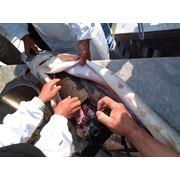Научные исследования разработка и усовершенствование технологии выращивания рыбы в условиях прудовых и индустриальной аквакультуры фото