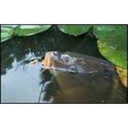 Продажа рыбы малек личинка годовик фото