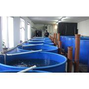 Разведение пресноводной рыбы рыбопосадочный материал Проектируем инкубационные участки фото