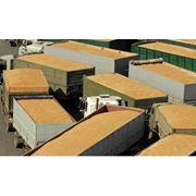 Перевозка зерна зерновозами с Черкасс фото