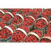 Подбор оборудования под технологию выращивания ягод фото