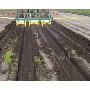 Опыт внедрения интенсивных технологий выращивания земляники в южных регионах Украины фото