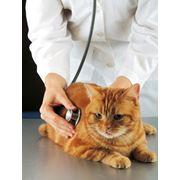 Частная ветеринарная лаборатория в Украине фото