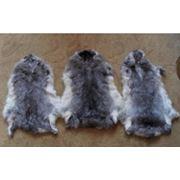 Выделка меха кролика лисы каракуля овчины медведя лося выделка меха Киев фото