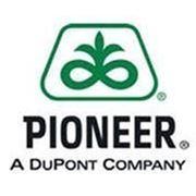 Семена подсолнечника Пионер ПР64Г46 фото