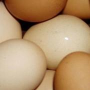 Яйца куриные в Казахстане фото