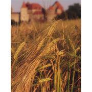 Страхование сельскохозяйственных рисков фото