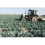 Страхование в сфере сельского хозяйства фото