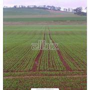 Страхование урожая с/х культур фото