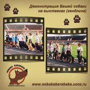 Демонстрация собаки на выстаках соревнованиях - хендлинг фото