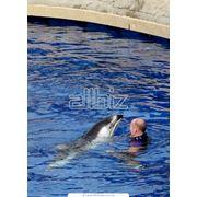 Дайвинг с дельфинами в Киевском дельфинарии фото