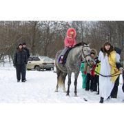 Зимние конные прогулки по лесу фото